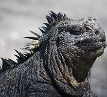 marine iguana by tripi100