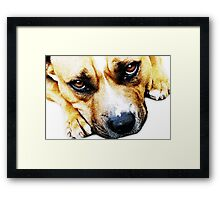 Bull Terrier Eyes Framed Print