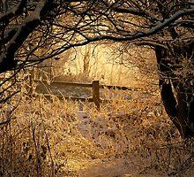 Sunlit Walk by Stan Owen
