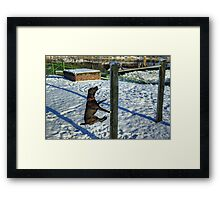 If Only Dogs Could Fly... Framed Print