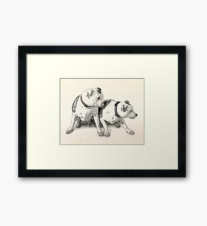 Two Bull Terriers Framed Print