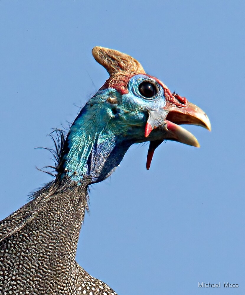 Helmeted Guinea Fowl by Michael  Moss