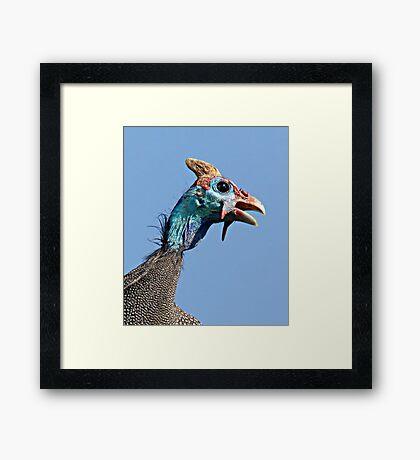 Helmeted Guinea Fowl Framed Print