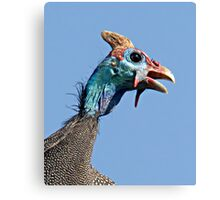 Helmeted Guinea Fowl Canvas Print