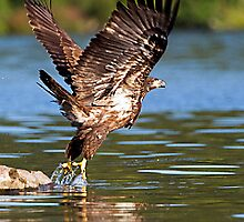 WE HAVE LIFT OFF by Dennis  Small