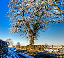 Winter Wonderland by Trevor Kersley
