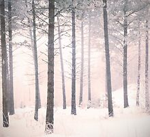 The Winter Forest by Tara  Turner