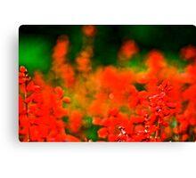 XMAS colours Canvas Print