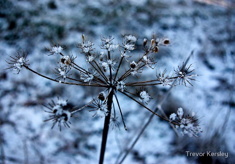 Frozen by Trevor Kersley