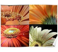 flowers of nature Poster