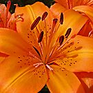 Lilies of the Day by Monnie Ryan