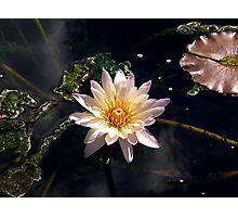 Waterlily - fall series Photographic Print