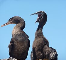 flightless cormorants by tripi100