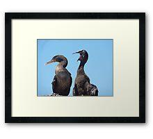 flightless cormorants Framed Print