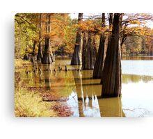 Cypress Autumn Canvas Print