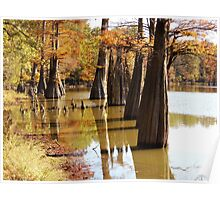 Cypress Autumn Poster