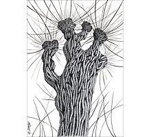 Pollard Willow Tree - Pen Drawing Photographic Print