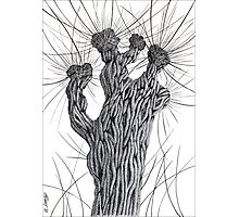 Pollard Willow Tree - Pen Drawing Photographic Print