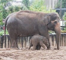 Asian Elephant and Baby, Chester Zoo, UK by Michaela1991