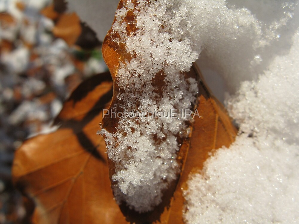 Ice and Leaf by PhotogeniquE IPA