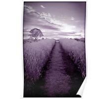 Lavender Magic Poster