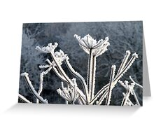 The Beauty of Frost Greeting Card