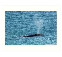 Great Southern Right Whale Art Print