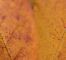 Leafusion by yvesrossetti