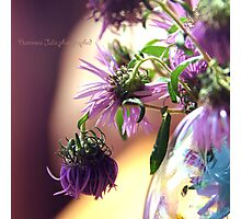 purple corn flowers in a vase Photographic Print
