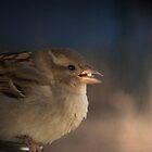 Happy Sparrow by Penny Odom