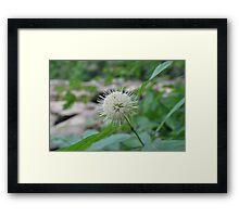 Photography-4 Framed Print