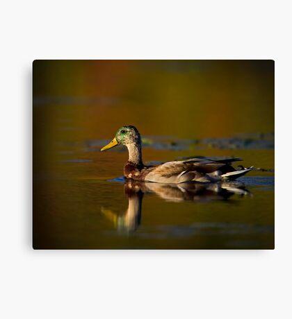 Cross-dressed Duck Canvas Print