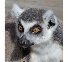 I Do Not Believe It - Ring-tailed Lemur Photographic Print