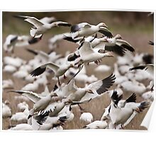 The Miracle of the Snow Geese Migration Poster