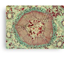 Microscopic Image 2 - Scientist Canvas Print