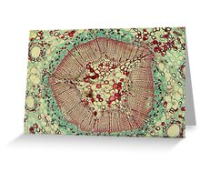 Microscopic Image 2 - Scientist Greeting Card
