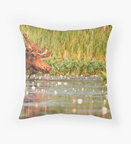 Moose In The Marsh Throw Pillow
