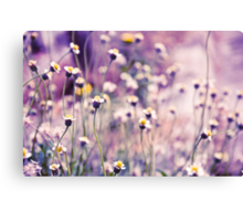SOLD; Purple field: Explore; Got 7 Featured Work, One Explore Featured Canvas Print