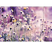 SOLD; Purple field: Explore; Got 7 Featured Work, One Explore Featured Photographic Print