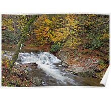 Laurel Creek Cascades III Poster