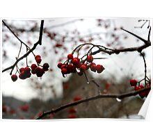 Raining Berries Poster