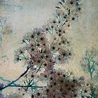 Cherry Shadows by Helen K. Passey