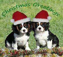 Christmas Cavaliers by Jenny Brice