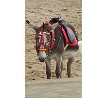 Danny the Beach Donkey Photographic Print