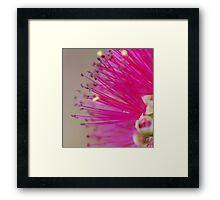 A Brush of Pink Framed Print