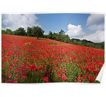 Poppies all over the place Poster
