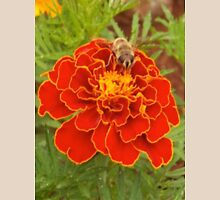 Hoverfly on the Marigold Womens Fitted T-Shirt