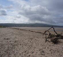 Driftwood - Ayrshire, Scotland by GraceEmily27