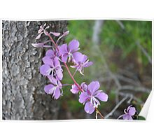 Pretty Mauve Flower on Hiking Track. Poster