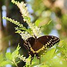 Butterfly by Alberto  DeJesus